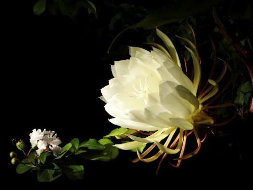 y nghia hoa quynh14