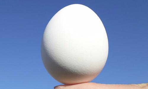 VNE-Egg-jpg-4205-1460165993