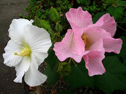 8 loại hoa tuyệt đối không sử dụng trong ngày nhập trạch